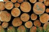 Holzmarktbericht für das zweite Quartal 2020