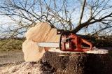Grundkurs: Sichere Waldarbeit mit der Motorsäge des AELF Pfaffenhofen