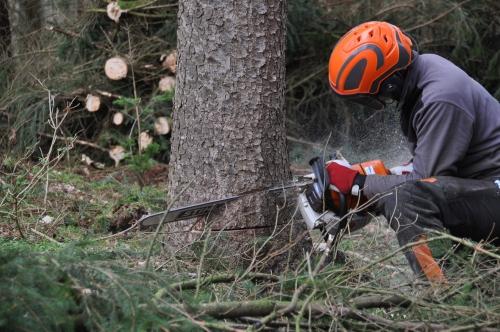 Aufbaukurs zur sicheren Waldarbeit mit der Motorsäge des AELF Pfaffenhofen