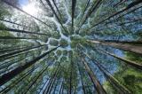 neue LWF Praxishilfe Klima - Boden - Baumwartenwahl veröffentlicht