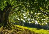 Holzpreisanalyse für Baumarten mit geringen Verkaufsmengen